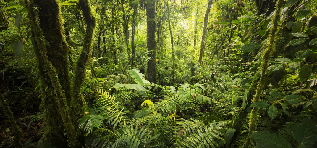 The luscious cloud forest from the forest floor