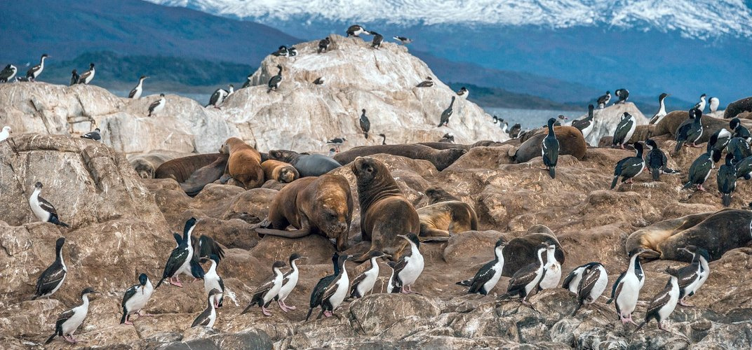Cormorants and seals along the Beagle Channel