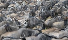 Tanzania's Great Migration