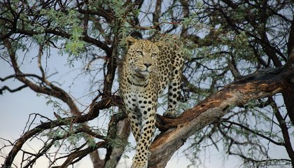 tailor-made-travel-namibia