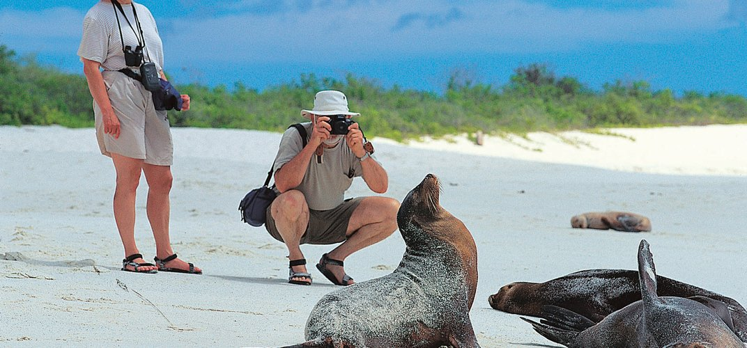 Travelers snapping a photo of seals