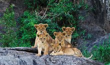 Tanzania Safari: A Family Journey