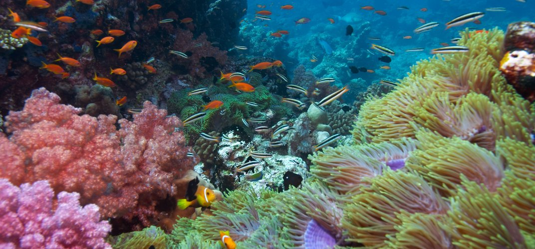 Tropical fish and coral, the Great Barrier Reef